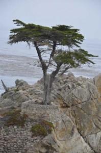 Day 7 - California Carmel 17 mile drive cypress 8